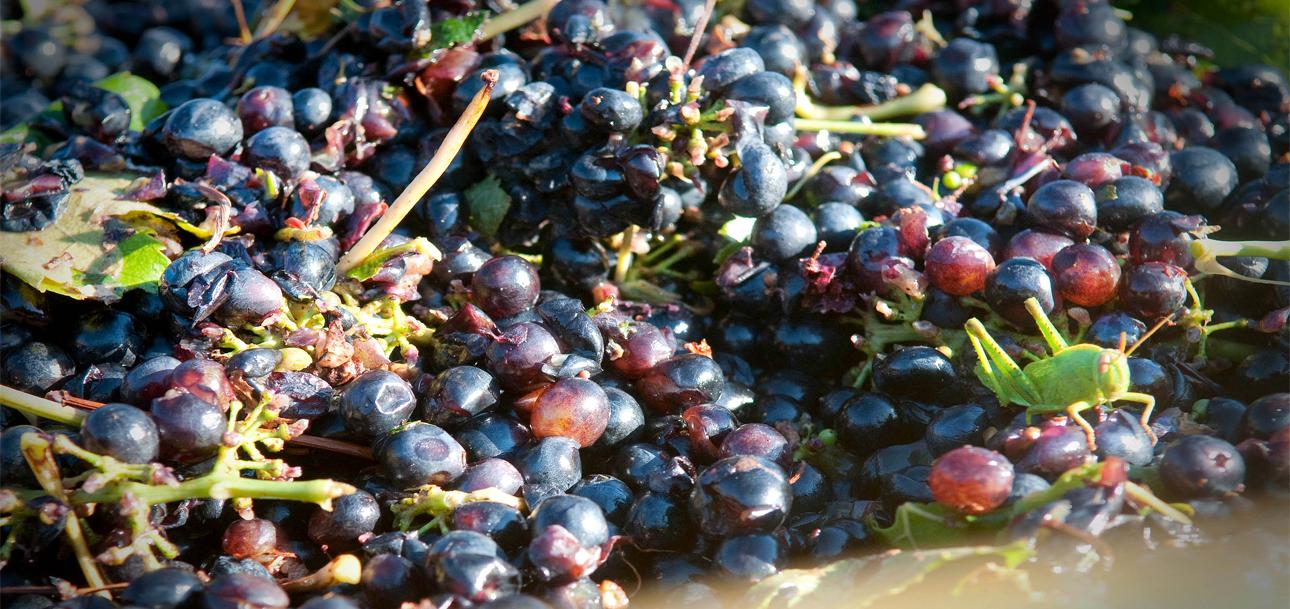 Agriculture Biologique, le Respect de l'Environnement et de nos Consommateurs au cœur de nos priorités